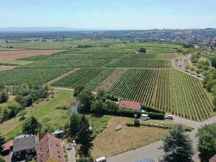 Baugrundstück am Deutschen Weintor - Südliche Weinstrasse