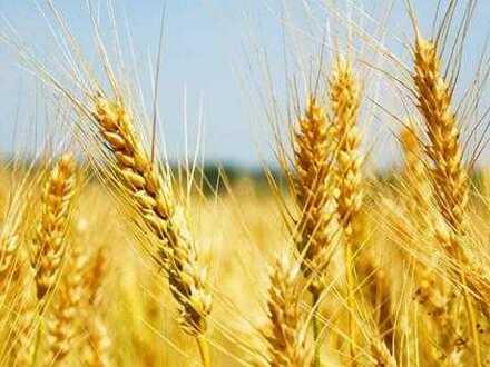 BAUERNHERZEN schlagen höher - Großer Landwirtschaftlicher Acker zu verkaufen