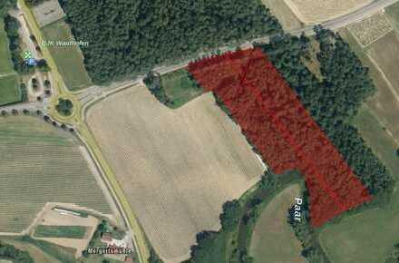 Waldgrundstück bei Waidhofen zu verkaufen !
