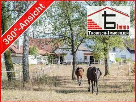 Wochenendhaus-Koppel-Bauplatz mit Pferdestall - über 9000qm | Trobisch-Immobilien