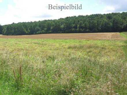 Wiese/Grünfläche bei Schrobenhausen