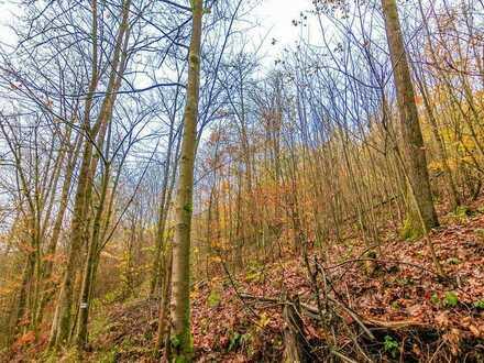 Holz in rauen Mengen - Waldgrundstück bei Grafengehaig