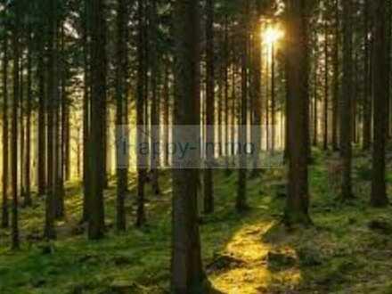 Mischwald nahe Dießen am Ammersee