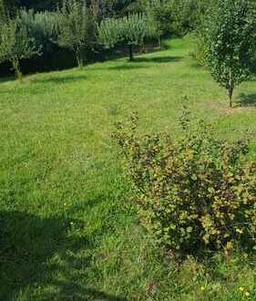 Bauplatz und Gartenland mitten im Herzen von Michelstadt