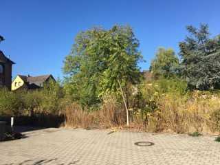 Schönes Baugrundstück in Fechenheim-Nord