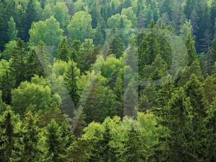 Waldgrundstück mit wertvollem Bestand, hiebreif