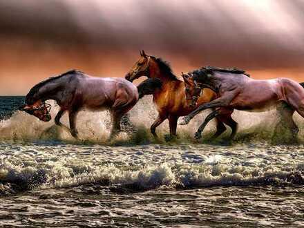 Grenzenlose Freiheit genießen!!!!!!
