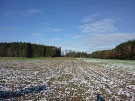 Landwirtschaftliche Fläche in Ebersberg / Auch als AUSGLEICHSFLÄCHE geeignet !