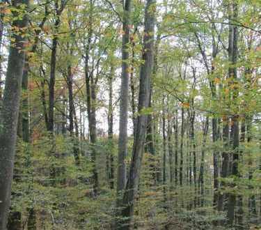 **2 Waldgrundstücke im Rheinhölzle zu verkaufen**