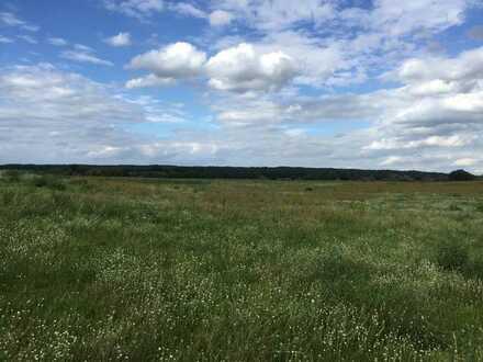 Flurstücke in traumhafter Naturlandschaft Schorfheide südlich der Buckowseerinne