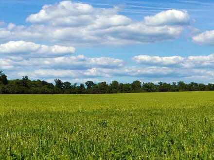 Landwirtschaftliche Grünflächen in Schermbeck