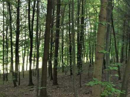 GANESHA-IMMOBILIEN...hervorragender Mischwald mit bestem Baumbestand zu verkaufen !