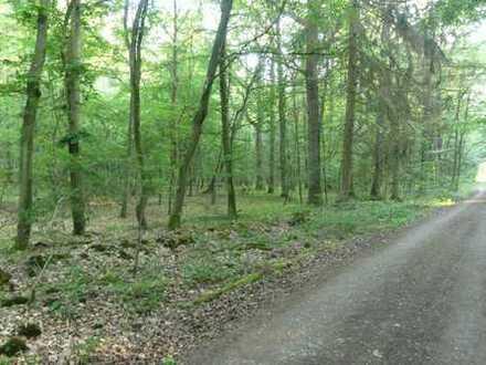 """Grundstückspaket """"Waldflächen"""" im Lkr. Würzburg"""