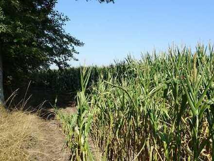 """Landwirtschaftliche Fläche in Schöppingen """"Im Stroenfelde"""" zu verkaufen!"""