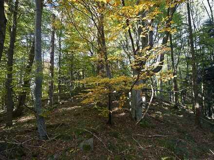Forst mit besonderer Baumartenvielfalt ca. 23 ha