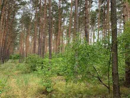 Waldflächen im Spreewald: