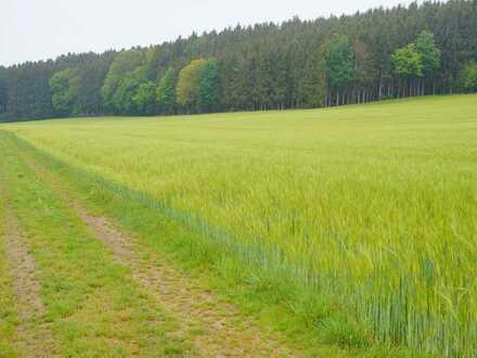 Landwirtschaftliche Fläche in Haldenwang, OT Eichenhofen zu verkaufen!