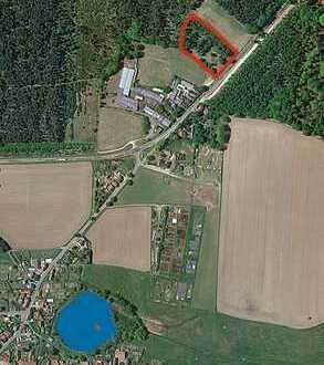 Waldfläche in 14827 Wiesenburg/Mark OT Jeserig/Fläming