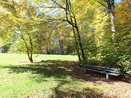 Erholung pur! Zauberhaftes Waldgrundstück mit sonniger Wiese in Berg am Starnberger See!