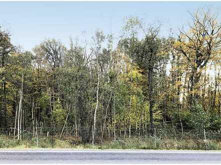 Forstfläche mit Laub- bzw. Nadelholzbestand