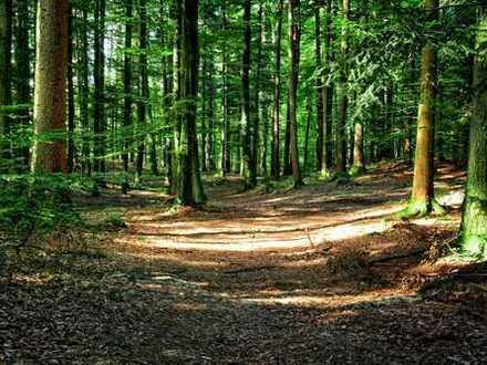 !!! Wald/ Gute Kapitalanlage !!!
