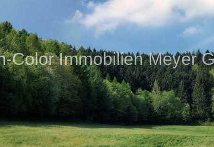 Wald- und Forstfläche