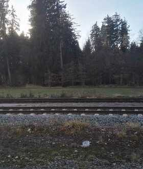 Waldgrundstück mit Altbestand und bester Zufahrt