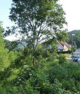 Bauen und Leben im Eyachtal- auch als Kapitalanlage möglich