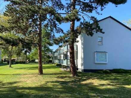 Schöne helle Wohnung mit Sonnenterrasse nähe Rheinaue