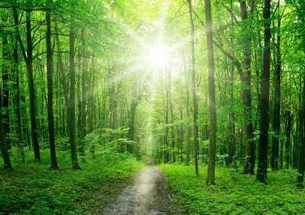 Waldgrundstücke zwischen 1.000m² - 12.000 m² bei Altenmünster zu verkaufen