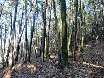 GANESHA-IMMOBILIEN...wunderschöner Mischwald sehr Ortsnah und gut erreichbar zu verkaufen !