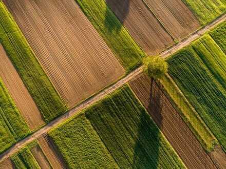 Ackerland und Wald bei Aichach Einmalige Gelegenheit für Landwirt oder Investor!