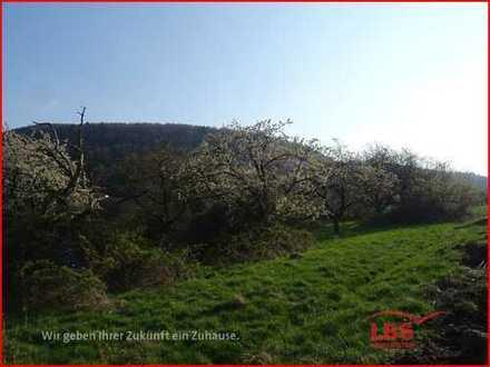 Ackerland mit Kirschbäumen zu verkaufen