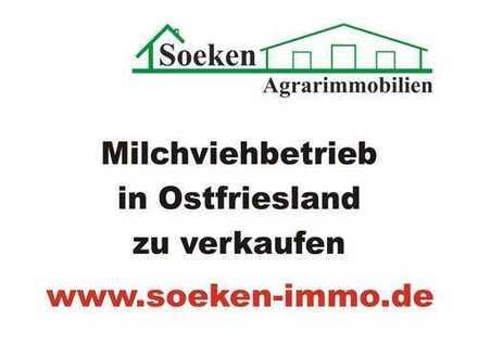 Milchviehbetrieb in Ostfriesland zu verkaufen *HF1808*