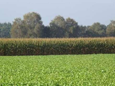 1,66 ha Ackerland zu verkaufen, Gemeinde Großenkneten, OT Sage