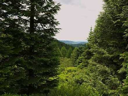 Verkauf eines rentablen Feriendorfes im Thüringer Wald aus Altersgründen