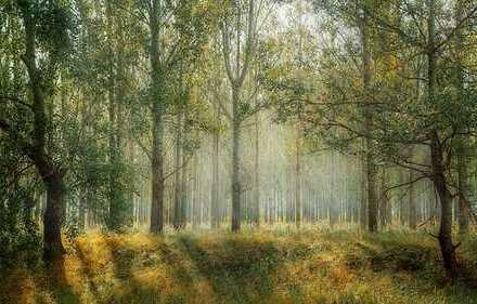Waldgrundstücke ab 871 m² - 11.600 m²