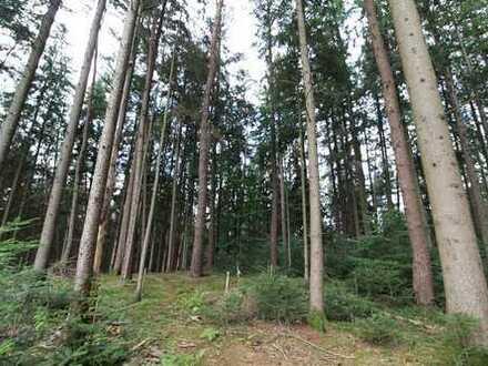 Waldgrundstück -  Ideal für den eigenen Bedarf !