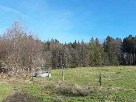 Fichtenwald in alle Altersstufen, teils schlagbar