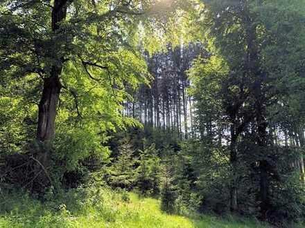 *** Seltene Gelegenheit - Rund 1,77 ha Waldfäche zu verkaufen ***