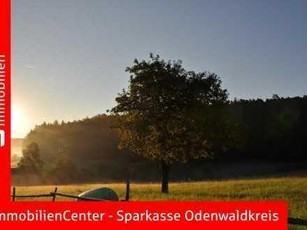 Wald in der Gemarkung Falken-Gesäß - In Teilflächen oder als Paket