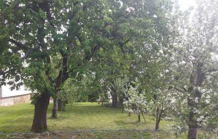 Schön eingewachsenes Bau-Grundstück mit altem Obstbaum Bestand im Ortskern von Mensfelden