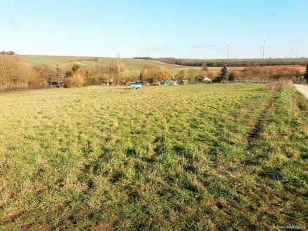 HEMING-IMMOBILIEN - 1 ha Weide möglich - liebevolle Hofreite mit Platz für Pferde