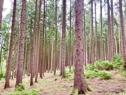 Waldgrundstück bei Weiden