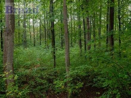 Gemeinde Ovelgönne: 4 ha Waldgrundstück zu verkaufen