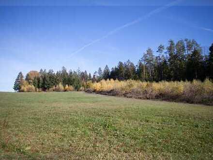 Landwirtschaftliche Wiesenfläche mit jungem Waldstück bei Tiefenbach