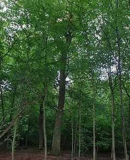 Waldgrundstücke in 67098 Bad Dürkheim OT Hardenburg, Flurstück 6720/155