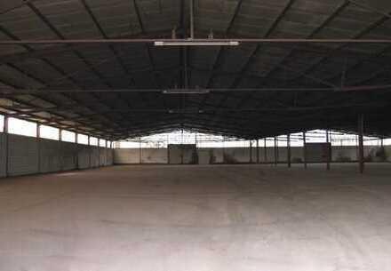 Baddeckenstedt, ca. 4.000 m² ebenerdige Kalthalle zu vermieten