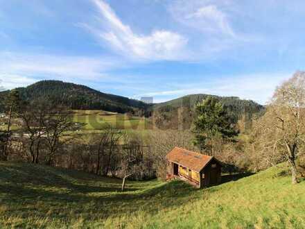 Wohnen oder Urlaub machen in der Natur: Renovierte, charmante Dachgeschosswohnung im Schwarzwald