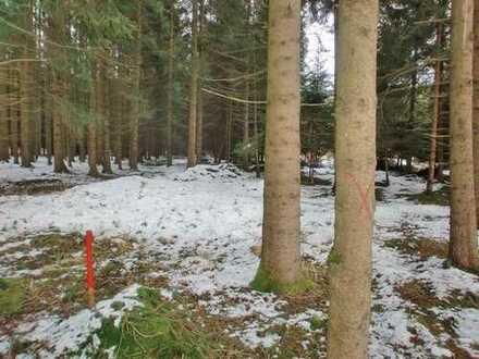 Wald westlich von Geltendorf